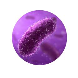 Infectie urinară cu E Coli